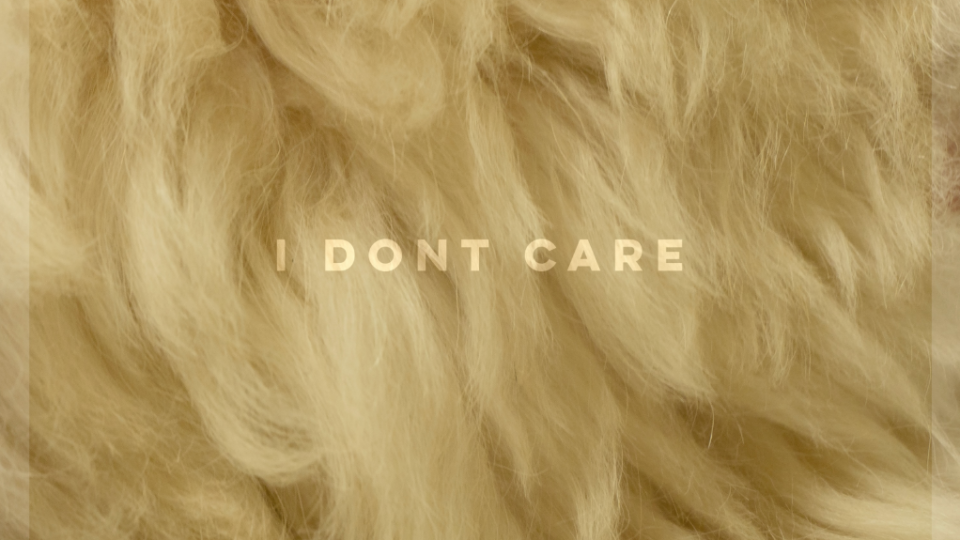 Hybrid Taiwanese Indie Band Violet Lens 紺樂團  Releases Puppy Love Single 'I Don't Care'